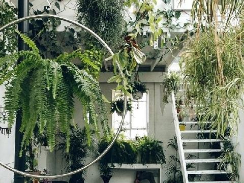 Những điều cấm kị khi đưa cây xanh vào nhà