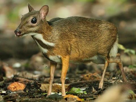 Loài vật gần như không tiến hóa từ thời tiền sử
