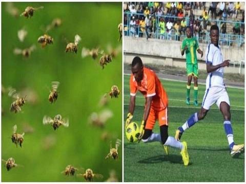 Đang thi đấu, cầu thủ chạy tán loạn vì... ong dữ tấn công!