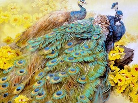 Vẻ đẹp nghẹt thở của chim khổng tước
