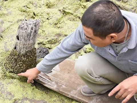 Phát hiện những cọc gỗ lạ kỳ nghi cọc gỗ Bạch Đằng huyền thoại