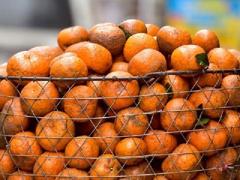 Ngoài chợ tiểu thương bán hàng mỏi tay vì mùa cam rẻ