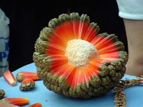 Những loại rau quả kỳ lạ nhất thế giới