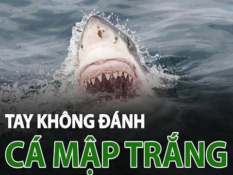 Tay không đánh cá mập trắng để cứu vợ