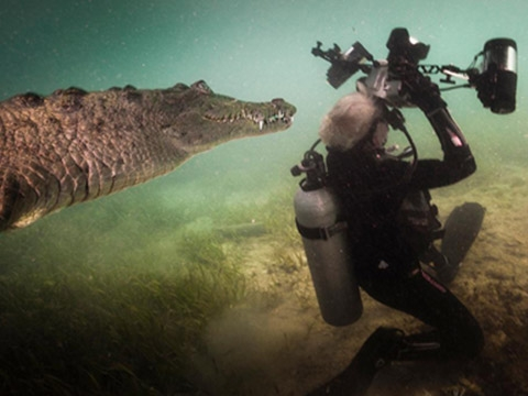 Thợ lặn chạm trán cá sấu dài 3 m siêu khủng