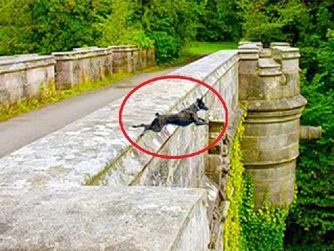 Giải mã bí ẩn ở cây cầu lạ khiến hàng trăm con chó tự tử hàng loạt
