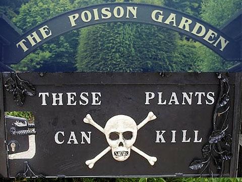 Kinh hoàng khu vườn động vào bất cứ thứ gì cũng 'chết ngay' lập tức