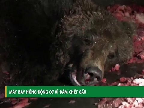 Máy bay hỏng động cơ vì đâm chết gấu