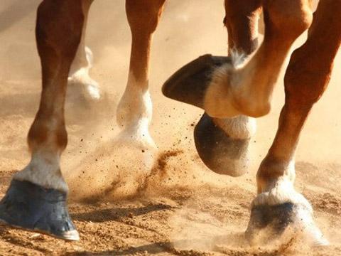 Chân ngựa và câu chuyện cái móng sắt không phải ai cũng biết
