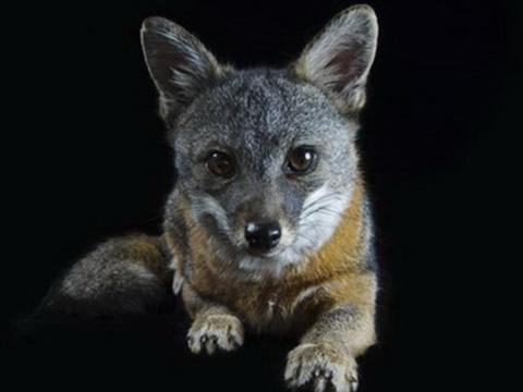 Điểm mặt những loài vật có nguy cơ biến mất khỏi Trái Đất