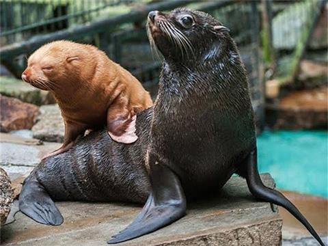 Những loài động vật cư xử giống như con người Phần 1