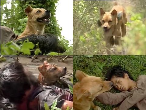 Xem lại màn diễn xuất của chú chó ta trong 'Đất Phương Nam'