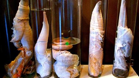 Những bảo tàng kỳ lạ nhất thế giới (P1)