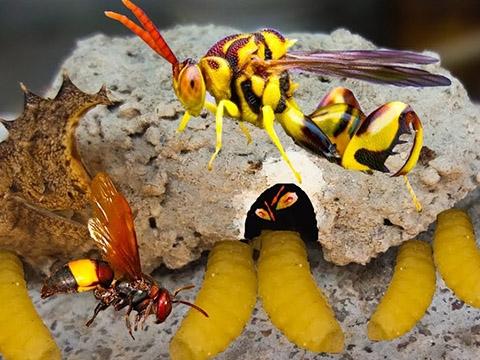Loài ong có vết đốt – đau hơn bất cứ nỗi đau nào