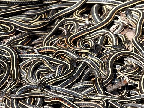 Run lẩy bẩy vào động rắn lớn nhất thế giới