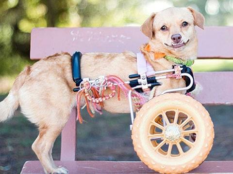 Những chú chó khuyết tật sẵn sàng truyền cảm hứng sống cho bạn