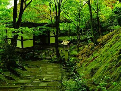 Lạc vào khu vườn rêu cổ tích siêu nổi tiếng Nhật Bản